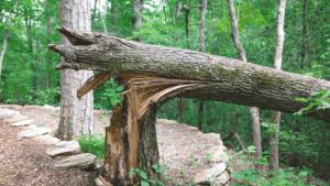 canton-storm-damage-services